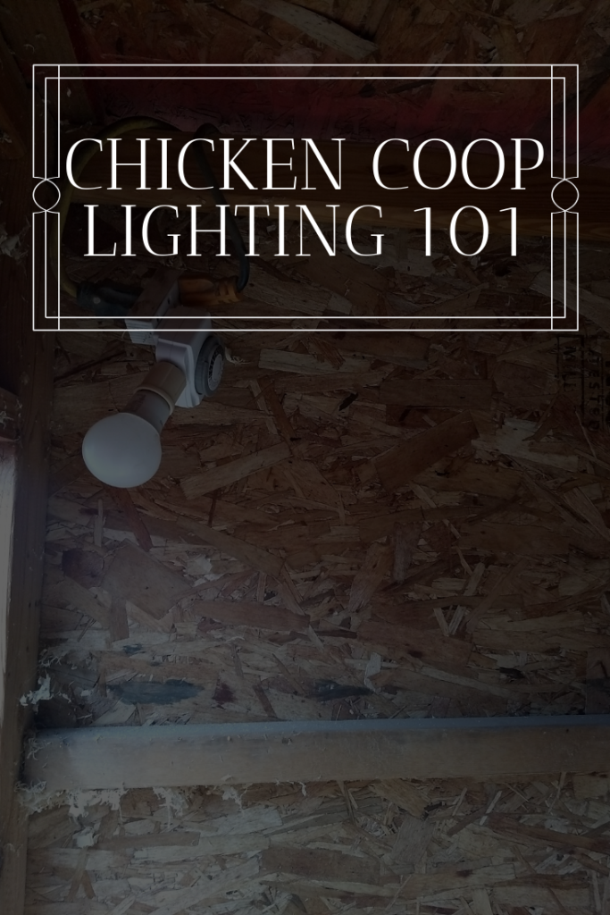 chicken coop lighting 101